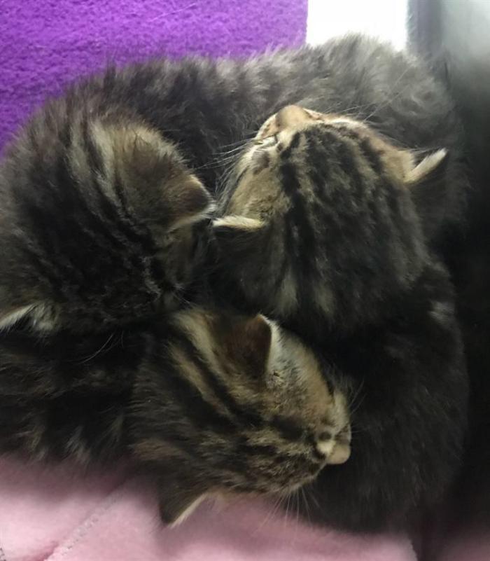 Ветеринар был добр к осиротевшим котятам, и они решили, что он – их мамочка