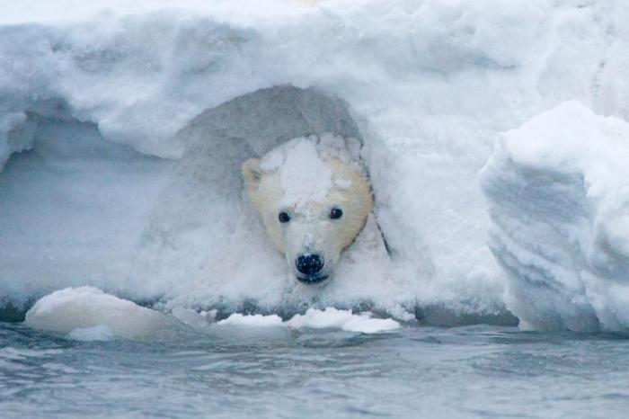 Масштабы глобального потепления в 7 фотографиях