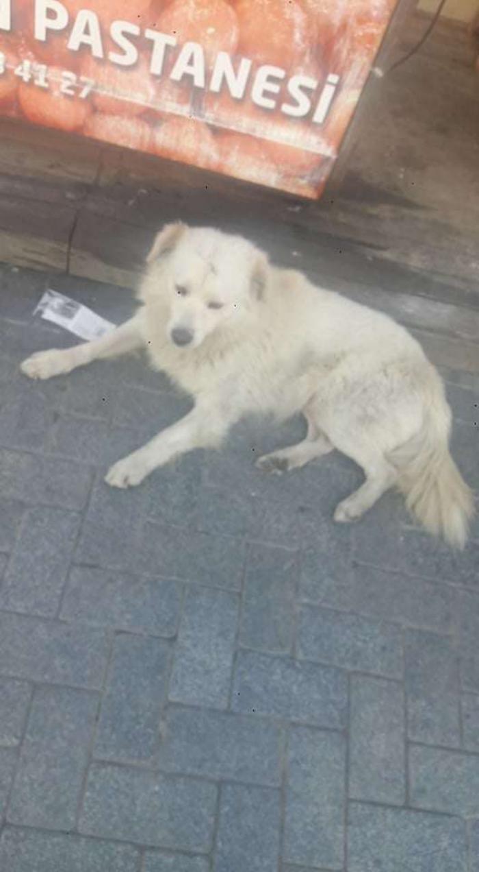 Семья встретила в другом городе своего пропавшего пса