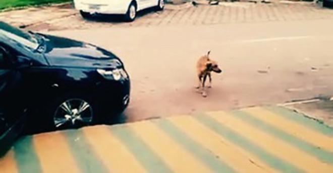 Собака просто шла по улице, как вдруг в машине заиграла музыка. Все внимание на реакцию пса!