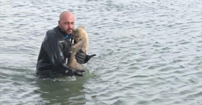 Щенок тонул на замерзшем озере. Посмотрите, что сделал полицейский-водолаз