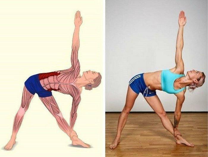 15 картинок о том, растяжка каких мышц нам нужна сильнее всего