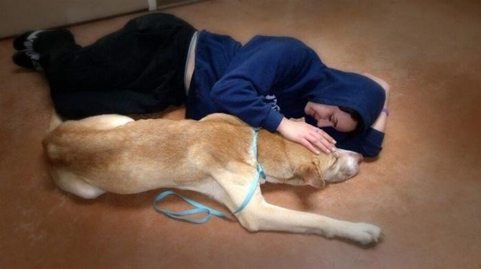 Бродячий пес боялся людей. Но девушка придумала как его спасти