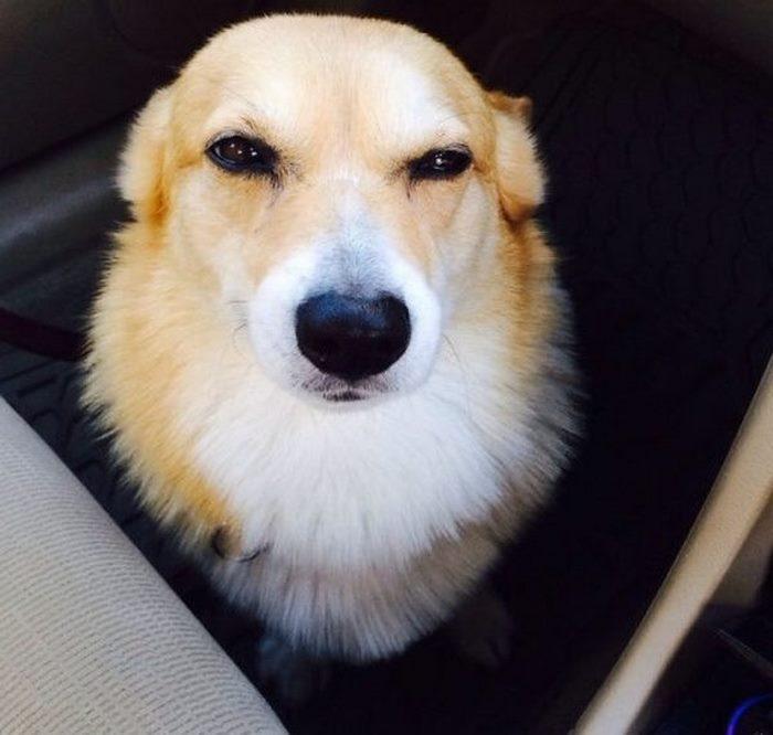 Забавная и умилительная реакция питомцев на новость о поездке к ветеринару