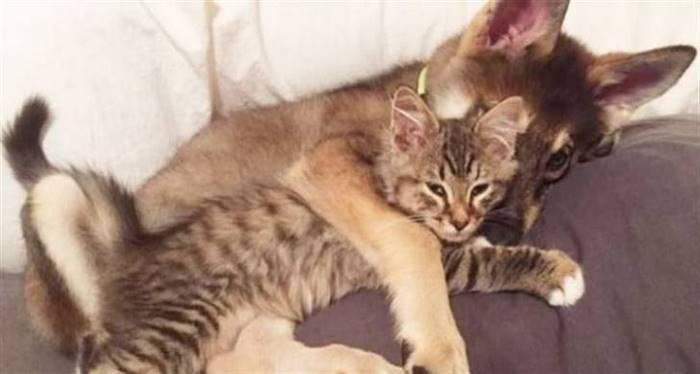 Пес нашел лучшего друга в приюте для животных, им стал милый котенок