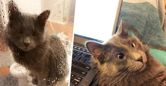 Благодарный за свой новый дом, кот из приюта охраняет хозяйку, везде сопровождая ее