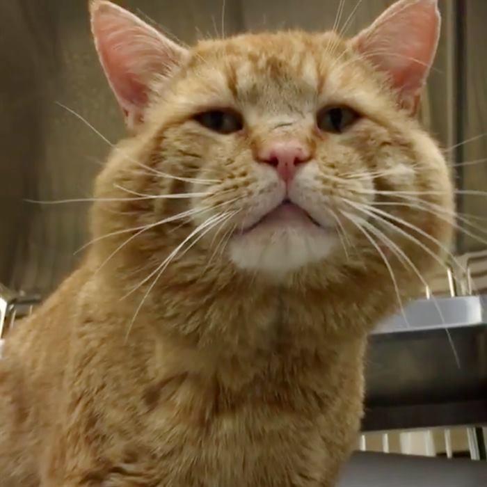 Огромный рыжий кот очутился в приюте и… вдруг заговорил с людьми!