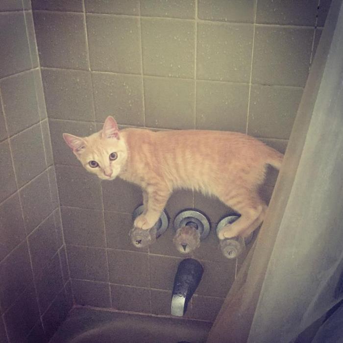 Доказательства, что кошки и странности — это почти синонимы