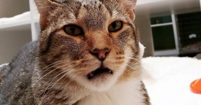 Свободу Квилти! Кота посадили в одиночную камеру за организацию побегов, но он сбежал и оттуда