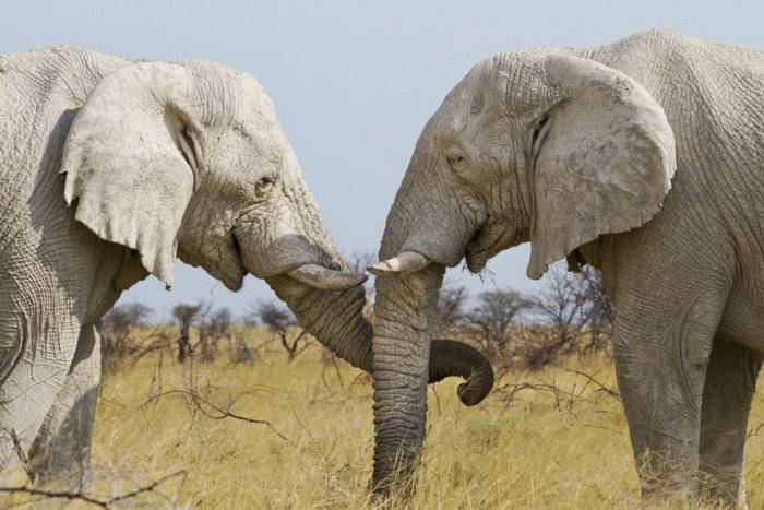 12 невероятных факта о жизни животных, вам будет сложно в это поверить