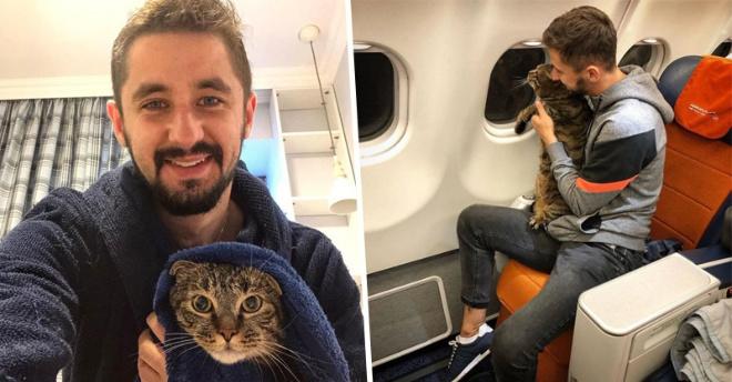 Крупный кот Виктор не мог попасть в самолёт. Тогда его владелец задумал подменить котов