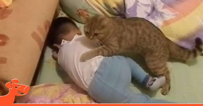 Мега позитивное видео: усатый-полосатый помог успокоить расплакавшегося малыша