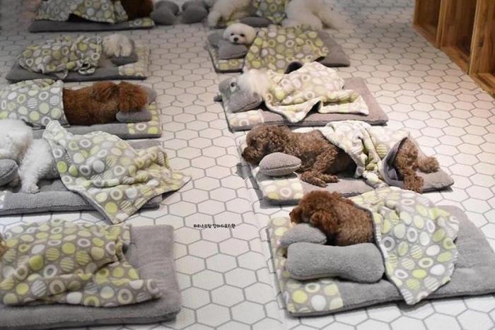 Самые очаровательные праздничные фото: щеночки сладко спят во время тихого часа в «детском саду для собак»