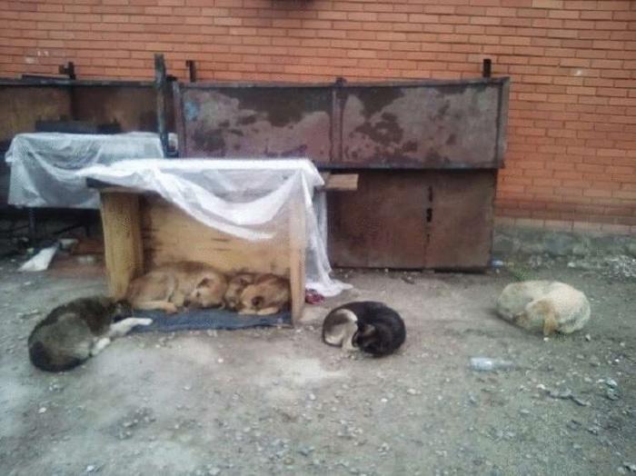 Мне не жалко людей, я жалею собак, Голодающих на вокзалах; Я жалею котят, что сидят в коробках