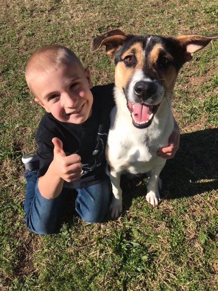 7-летнего мальчика, спасшего 1300 собак, признали «ребёнком года»