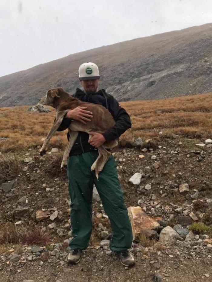 Женщина захотела проверить слухи о плачущей собаке в горах