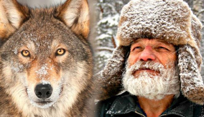 Лесник на Аляске кормил волка всю зиму: через 4 года волк вернулся и показал свою семью