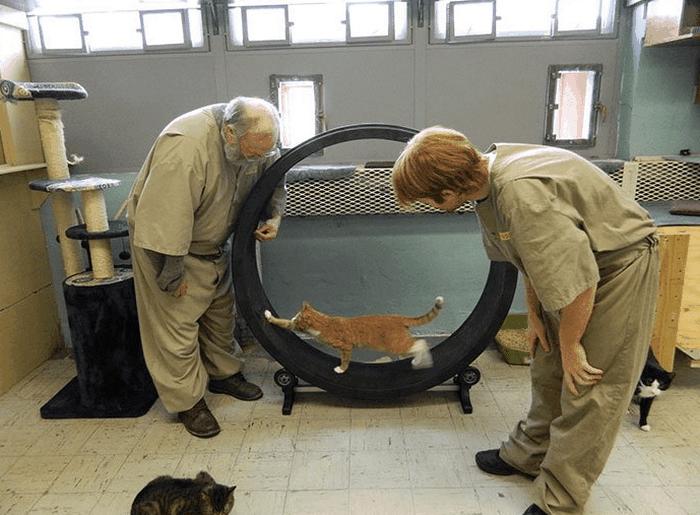 В тюрьме Индианы заключённым разрешают ухаживать за котами из приюта