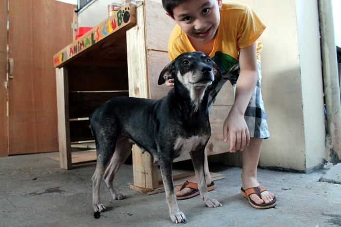 Мальчик из Филиппин отдавал все свои сбережения на корм уличным собакам