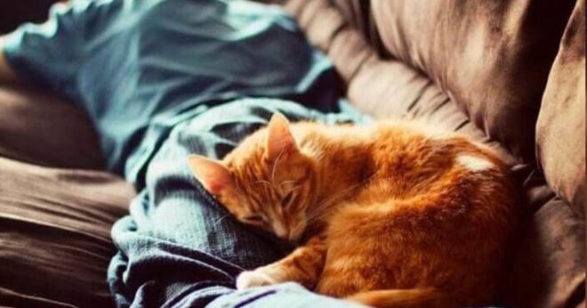 Почему кошке обязательно нужно лечь на стопку чистого белья или забытый на диване свитер?